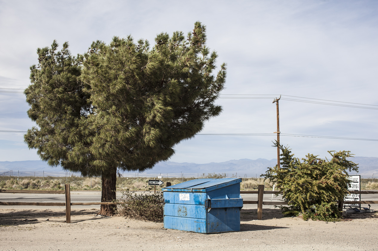 Californian Pine and Trash Can