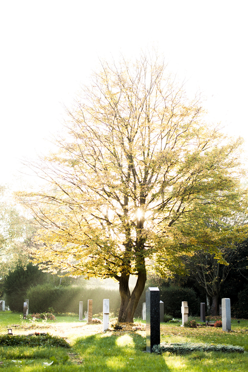 Cemetary and sunshine